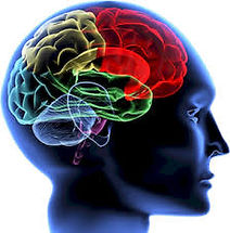 neuroscience.jpeg