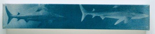 Double Sharks