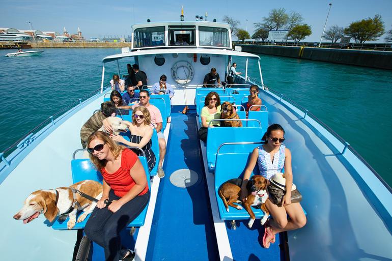 Mercury Canine Cruise