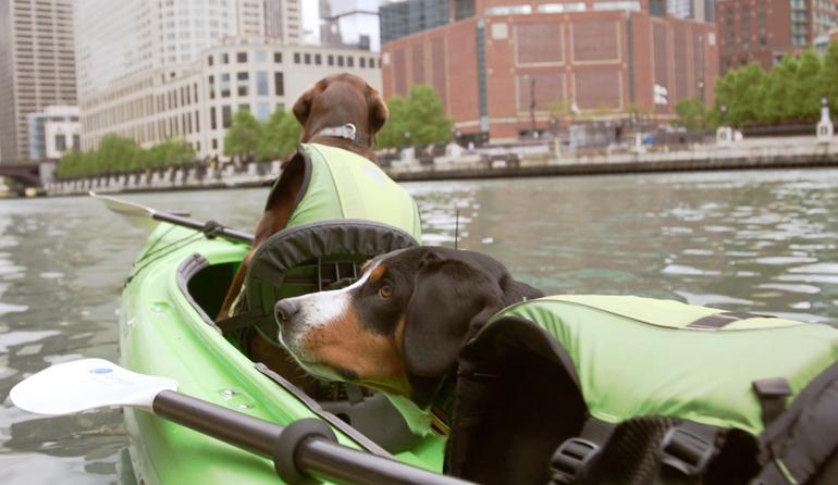 Dog Days of Summer - Kayak