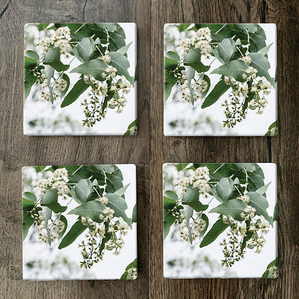 Ceramic Coasters - Ironbark Flowers