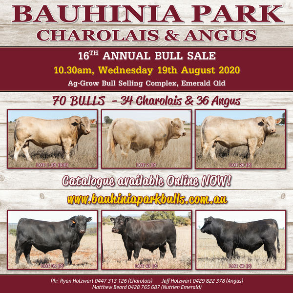 2020 Bauhinia Park Bull Sale - Catalogue