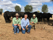 Jeff with Matthew Beard & Terry Ray, Landmark Emerald, inspecting 2017 Sale Bulls.