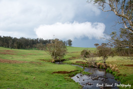 Between Armidale and Dorrigo, New England Region, NSW