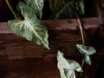 Moody Plants