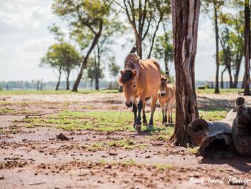 Horses | New Friends