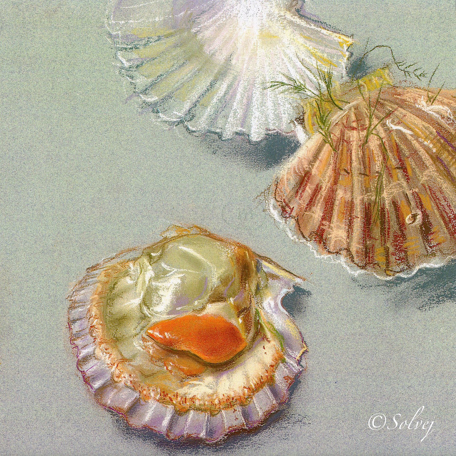 Coquilles St Jacques  448