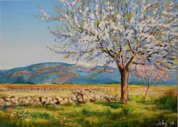 Le cerisier 6, printemps 599