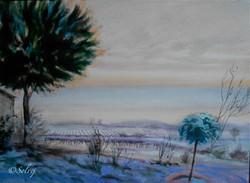 le pin 4, hiver     582