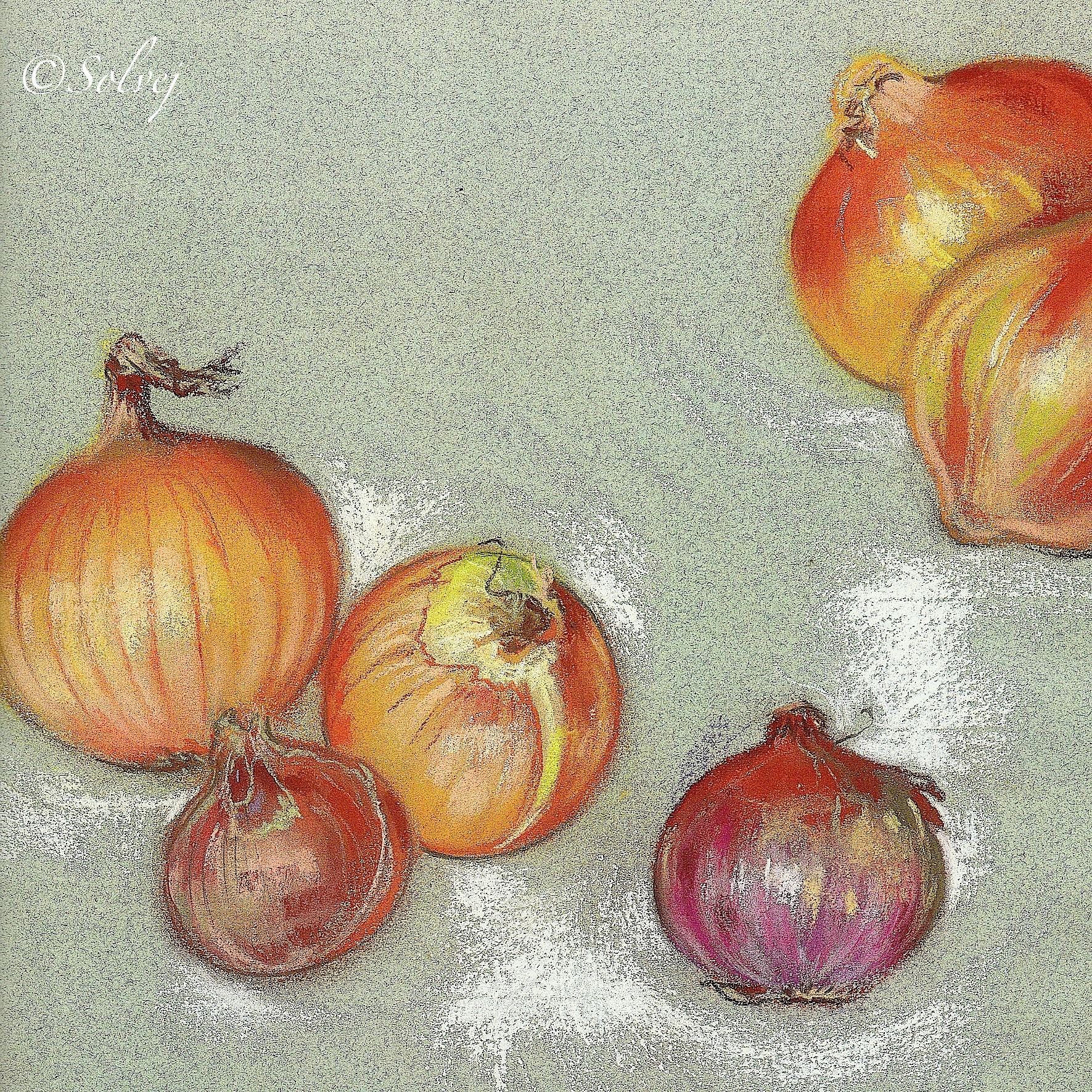 Oignons multicolores 523