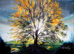 le tilleul 2, automne 565