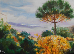 le pin  6, automne   593