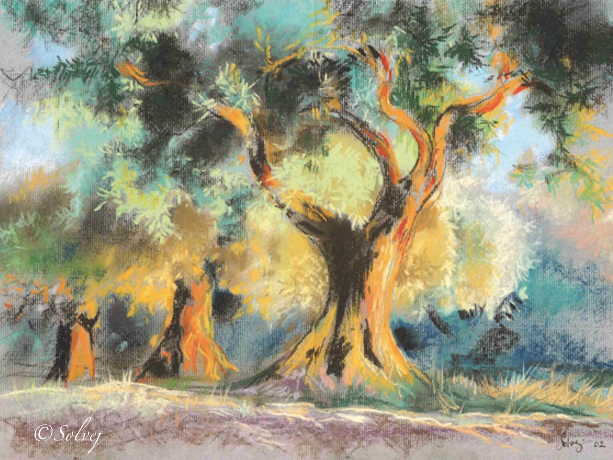 Trois oliviers, lumière du soir  470