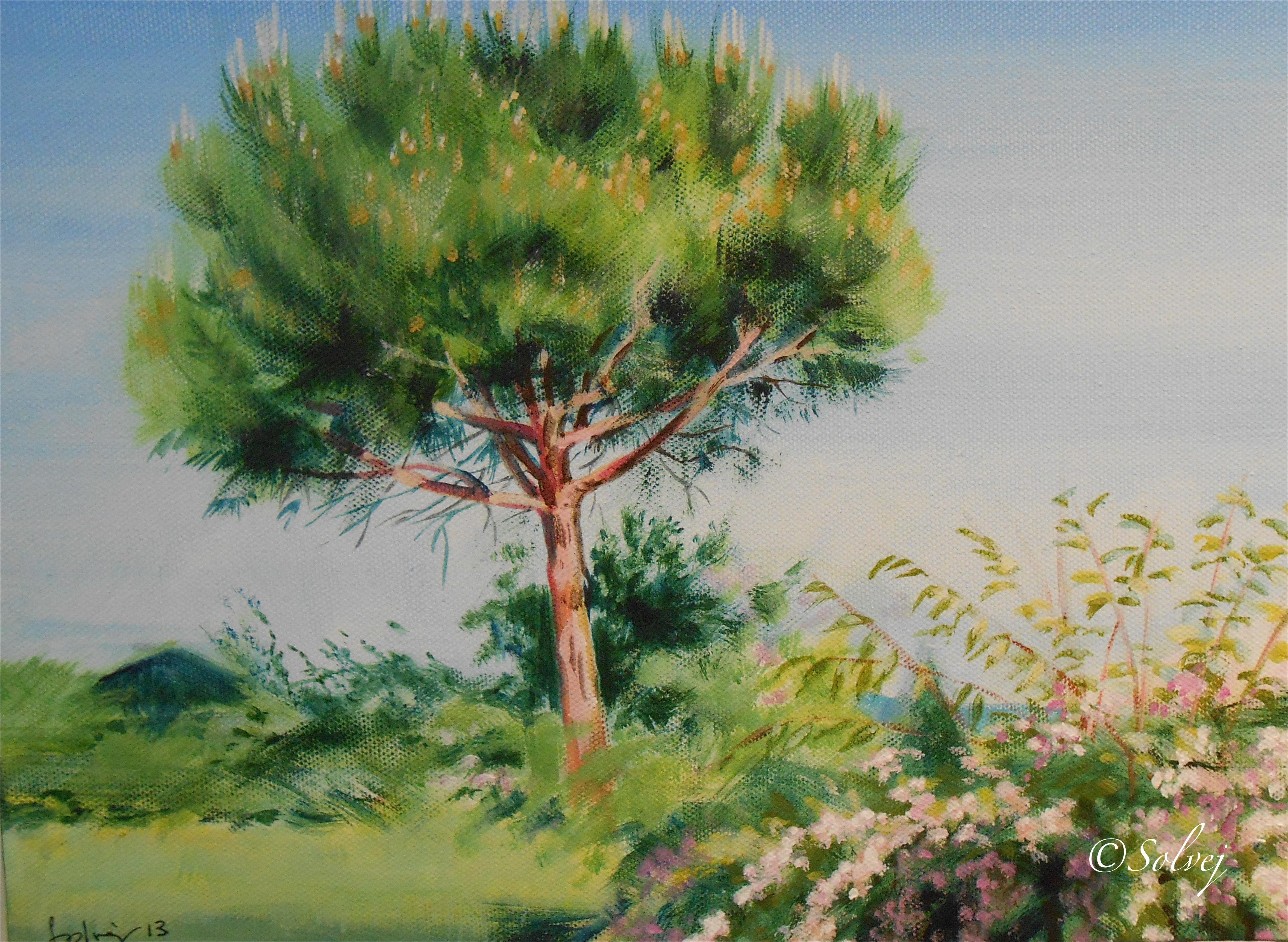 Le pin7, printemps   595
