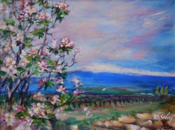VTX rose et fleurs de pommier 21 559-Ac 40x30 11:4:2011 - copie.JPG