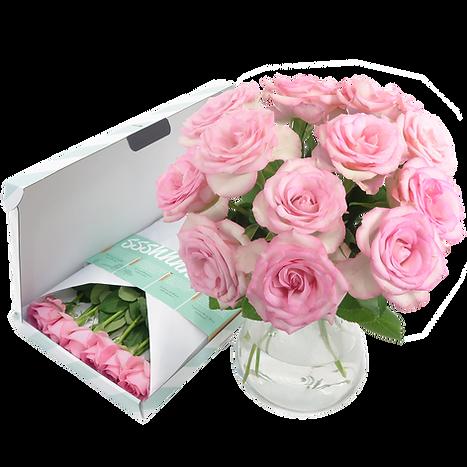 roze[web].png