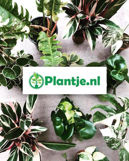 plantje.nl-plants-sturen-per-post-websho