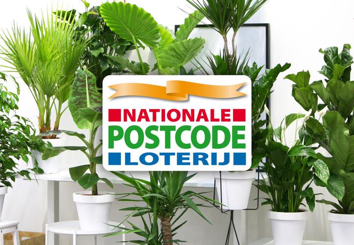 nationale-postcode-loterij-planten-bloem