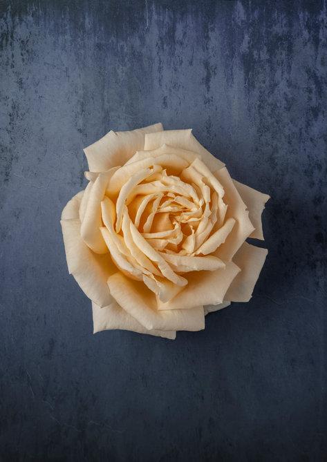 rose_bage_inst.jpg