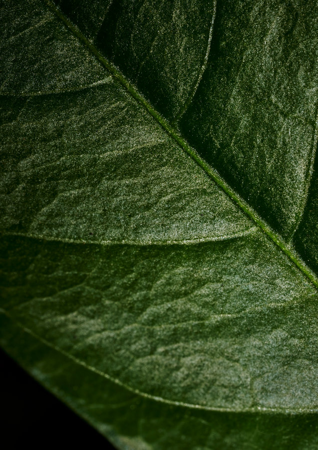 leaf_1_inst_crop.jpg