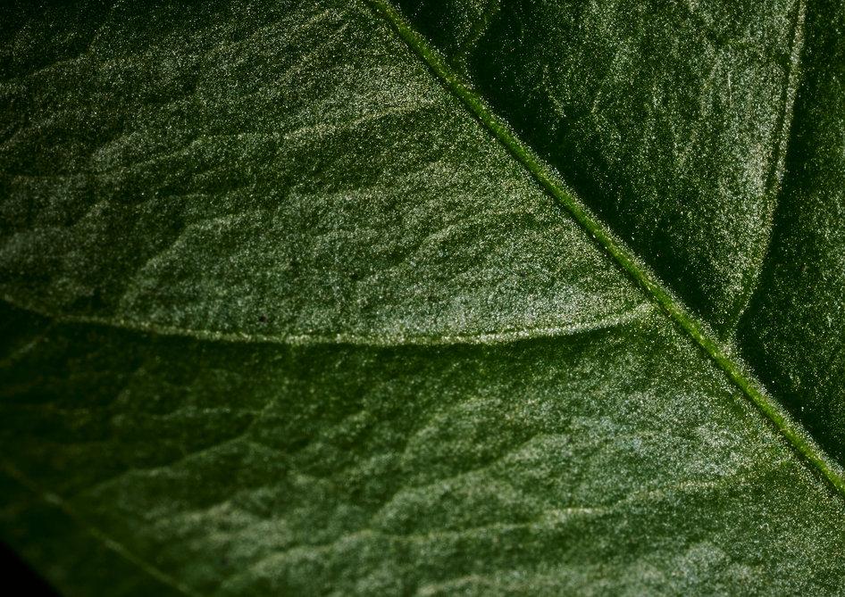 leaf_1_inst_crop.jpg