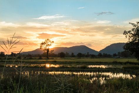Thai Rice Fields