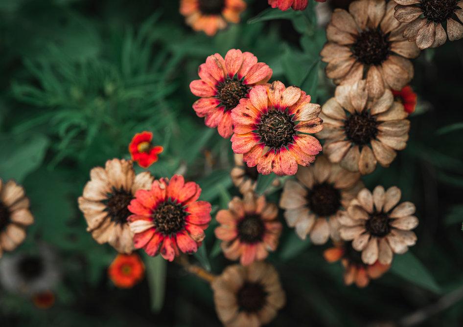 African Wildflower Background