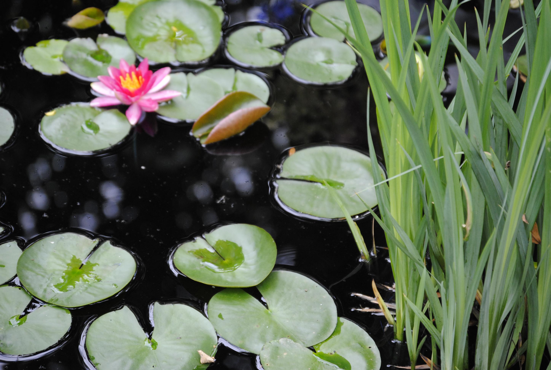 Monet Garden (79)