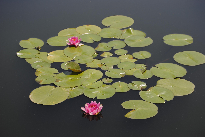 Monet Garden (86)
