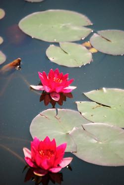 Monet Garden (91)_edited