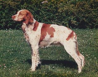 Bessy Marie Nylander 1987.jpg