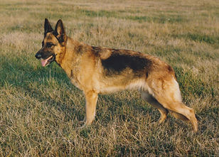 Ninette Sven Boberg 1985.jpg