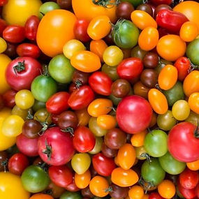 square-colorful-variety-of-tomatoes.jpg