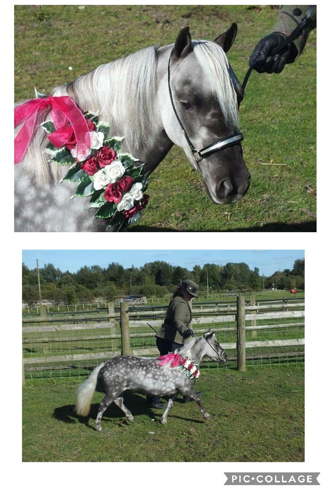 Ashley & Allstars Rowdy's Silver Shimmer