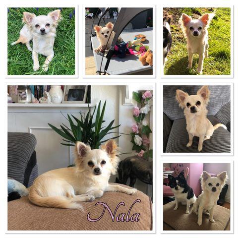 Jade Wheeler & Nala - class 3