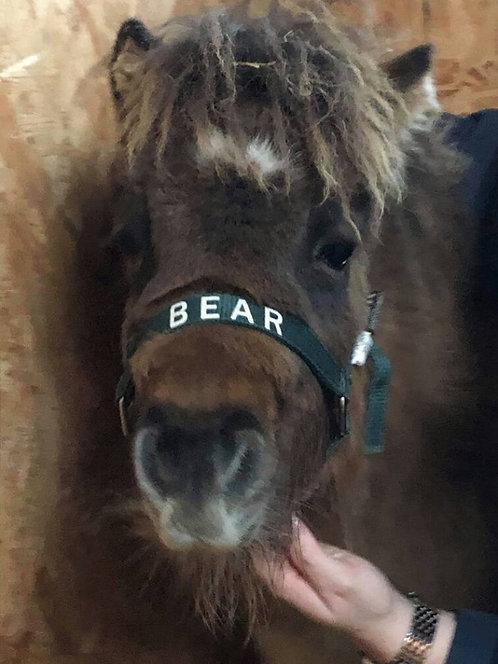 Mini Shetland Headcollar