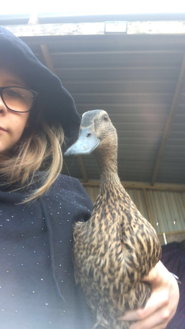 Daisy & Quackers - class 3