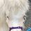 Thumbnail: Mini shetland foal headcollar