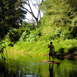 Stand Up Paddle Boarding (SUP)