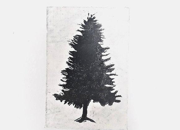 Grey fir Tree