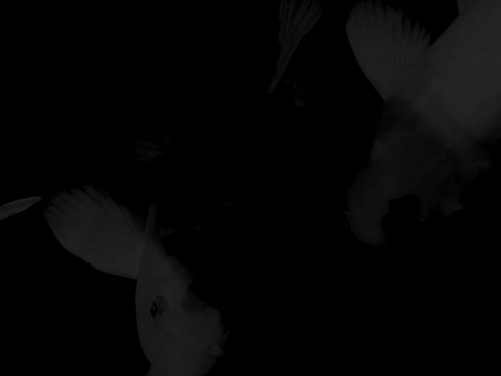 GENZAI SPONSORSHIP 3 copy 2.011.jpeg