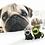 "Thumbnail: 'Pugicorn' petite enamel Sophie Corrigan ""Pugs in Fancy Dress"" series pin."