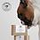 Thumbnail: Skin No 2 (Echinacea Soap)