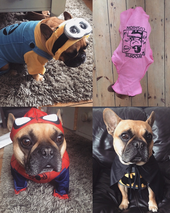 HALLOWEEN OUTFITS FOR DOGS: DUKE LOVES FERGIE STYLE