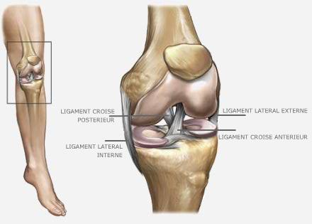 Ligaments croisés - Dr Grégoire BONJEAN