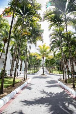 palmtrees resort
