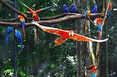 Arara_vermelha_-_Parque_das_aves_-_Foz_d
