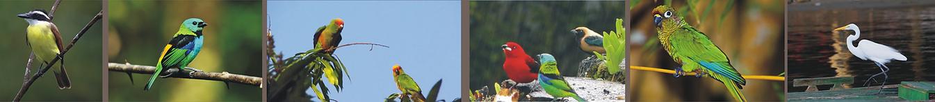 Banner Birds.png