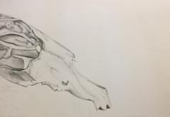 Skull | Pencils