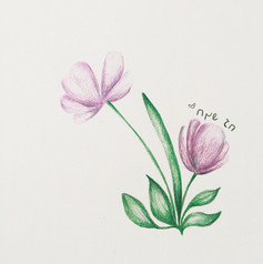 flowers   Colored Pencils